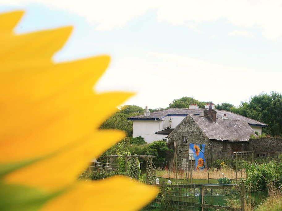 The Cottage with the sunflower mural:)
