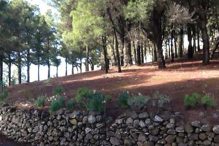 El Majadal - Vega de San Mateo