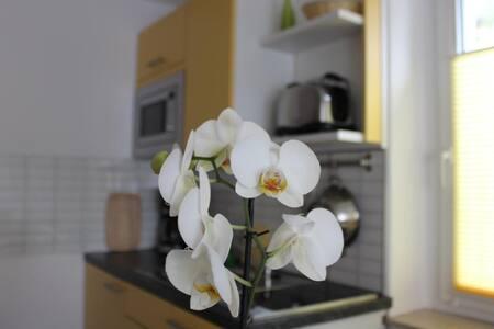 Weber Apartments - Pillnitz - Apartment