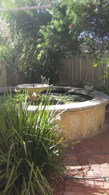 Tranquil pond with frogs in the rear courtyard.