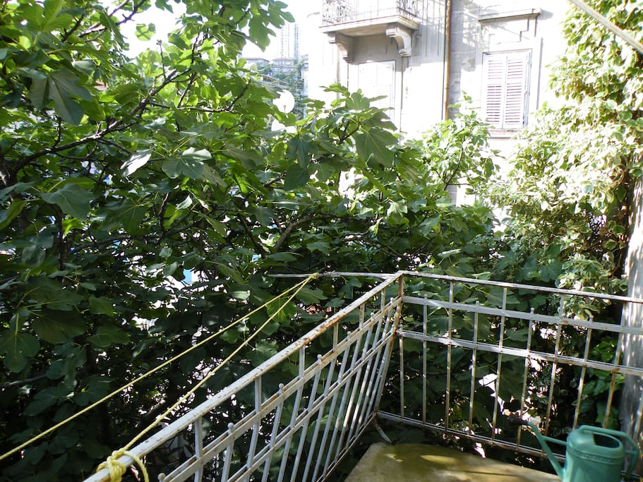 kitchen balcony and a fig tree
