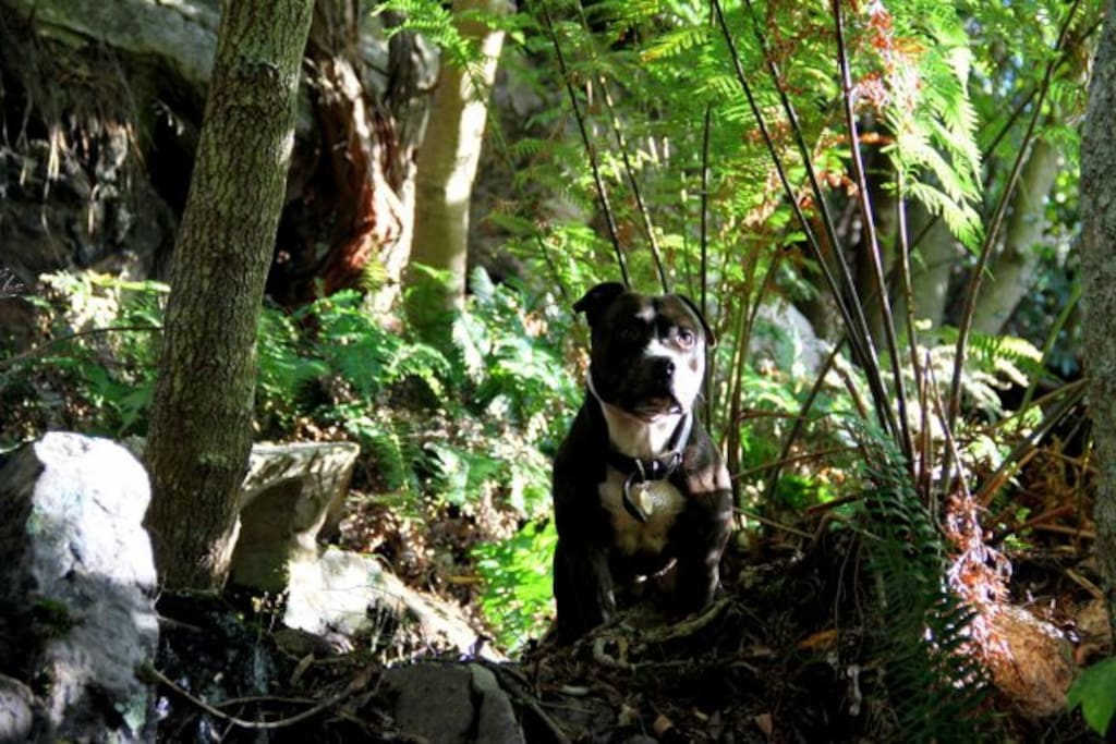 my dog jack at the waterfall