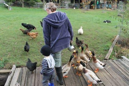 Nature's chorus calling! (Only 20mins 2 Penguins!) -  Launceston - Bed & Breakfast