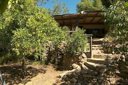 Vedranell - Eivissa