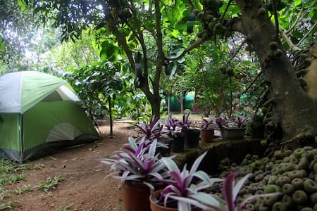For Groups!! Campstay in a fruit orchard! - Szoba reggelivel