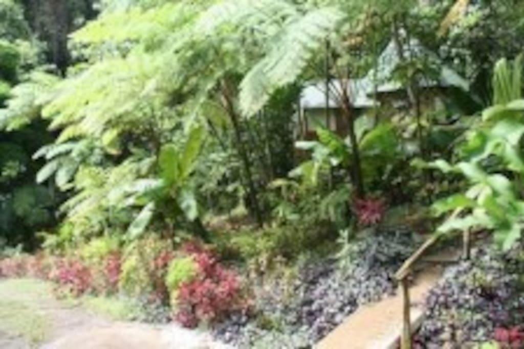 Roots Jungle Retreat - Tiano