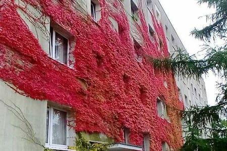 Room in Cottbus - Cottbus - Apartament