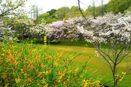 欢迎您们到日本看樱花 - Abiko - House