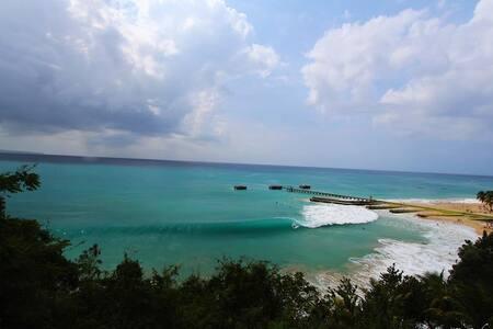 Dancing Tortugas- Ocean View