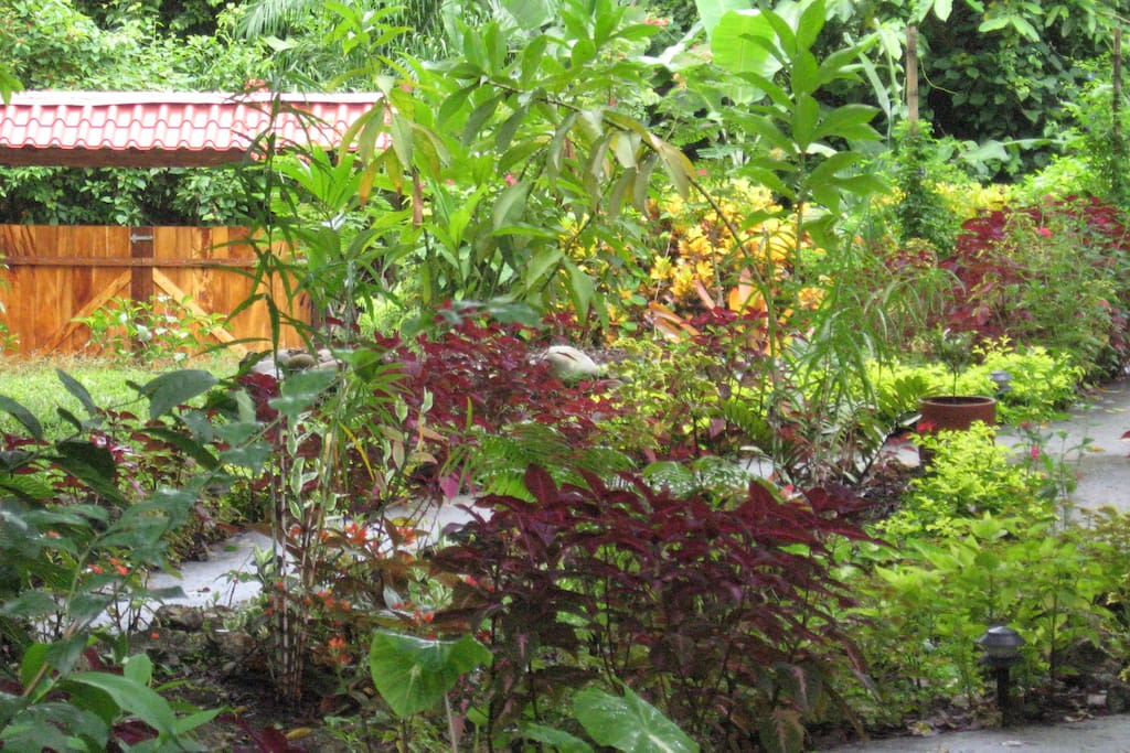 Lush flowered garden with lots of birds