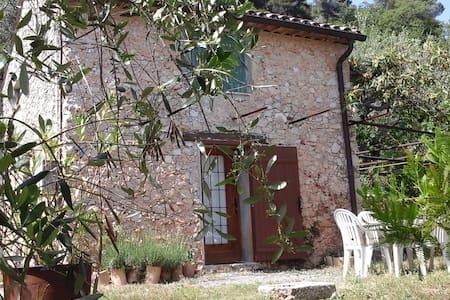 Studio au milieu d oliviers à Carros village - Byt
