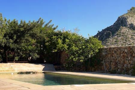 Orange Blossom - Castellón de la Plana