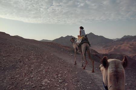 Exodus Nomadic Caravan - Eilat Red mountains - 텐트