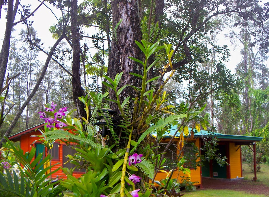 Rainforest Hideaway through the trees with orchids