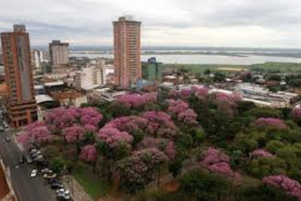 View of the Plaza Uruguaya from the apartment