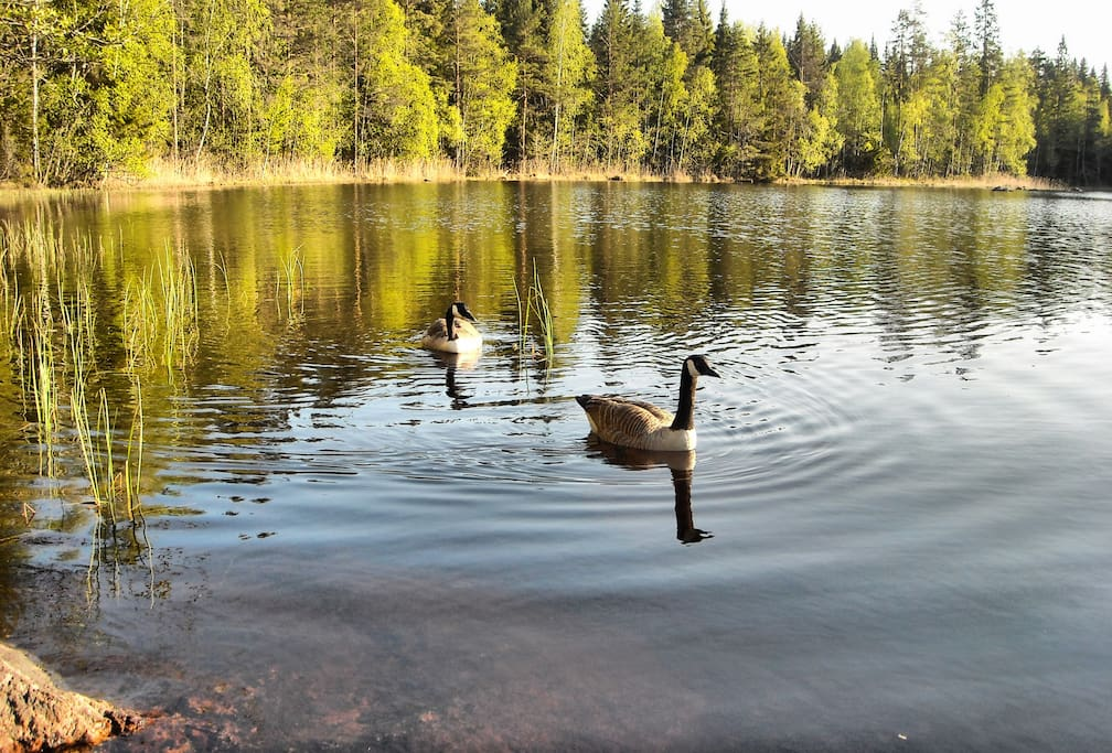 ОЗЕРО. our lake