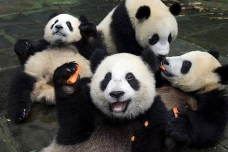 Airbnb1 QA Test Panda House