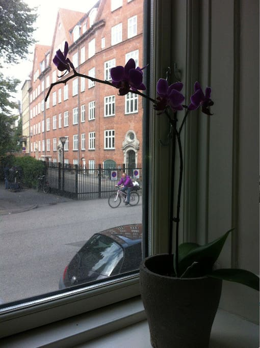 view to Istedgade from the living room