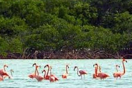 SeaView Rental Whitby North Caicos  (2 br sleep 6) - Haus