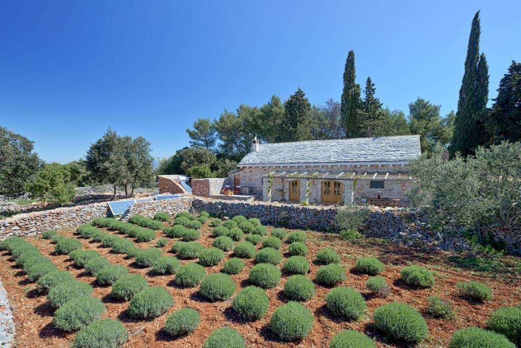 a fully eco house with a field of lavender in front , our bill for electricity and water is zero :)