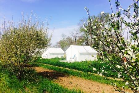 Modern Farmstay- Tent #4 - Zelt