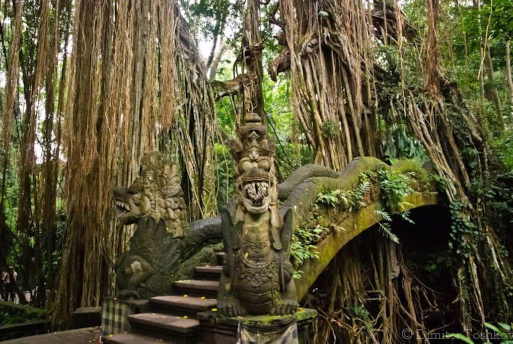 Monkey Forest - Ubud, Bali
