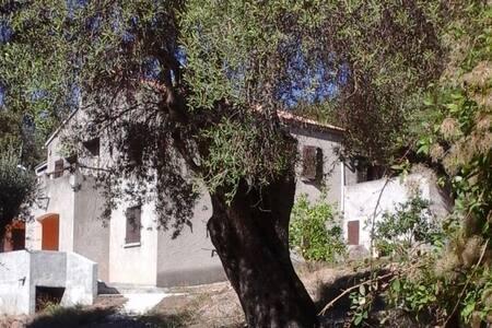 A CASA DI L'ALIVU - Studio Amandula - Apartment