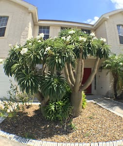A Tropical Retreat in the Valley! - McAllen