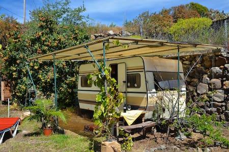 Wohnwagen auf Biofinca - Tijarafe