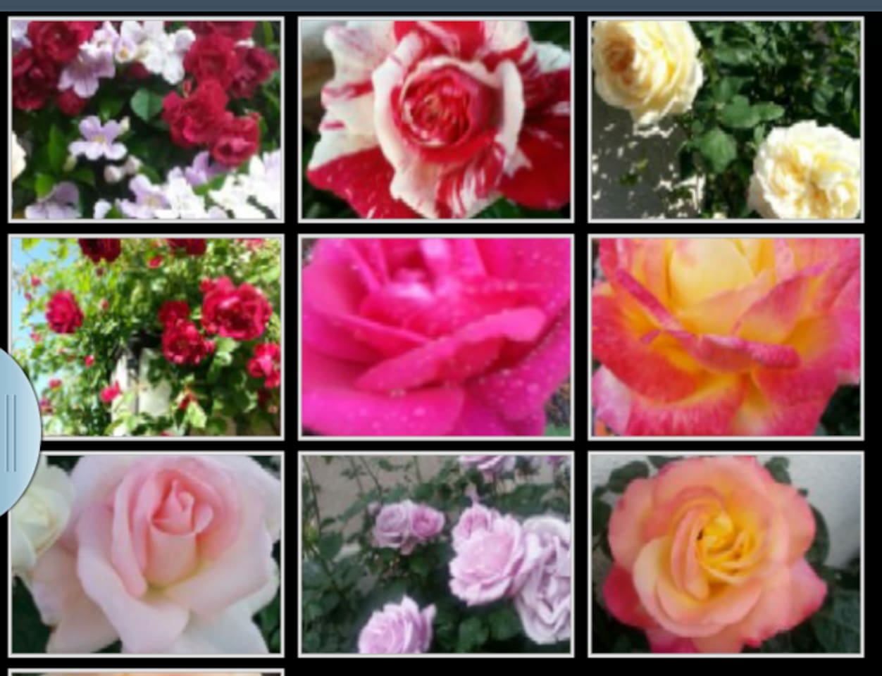 Smell our award winning roses at our garden.