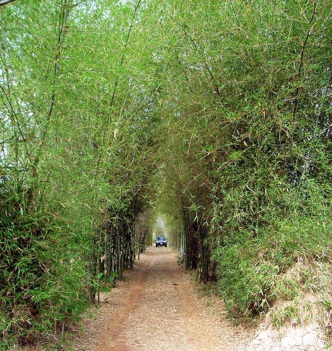 Entrance to the Thai countryside villa