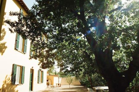The Yellow House - Italy - Civitella D'agliano - Villa