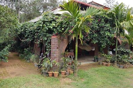 D&D Coffee Orchards, Nangala, Coorg - Kodagu - Bed & Breakfast