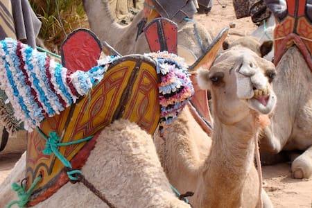 Sahara Camp - Mhamid - Bed & Breakfast