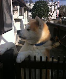 now under construction 旧家で秋田犬がいます。著名人の書画や日本刀もあります。 - Sangō-chō