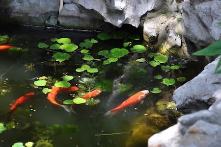 与拙政园、苏州博物馆比邻而居——体会江南人家小院生活 - Suzhou Shi - Lejlighed