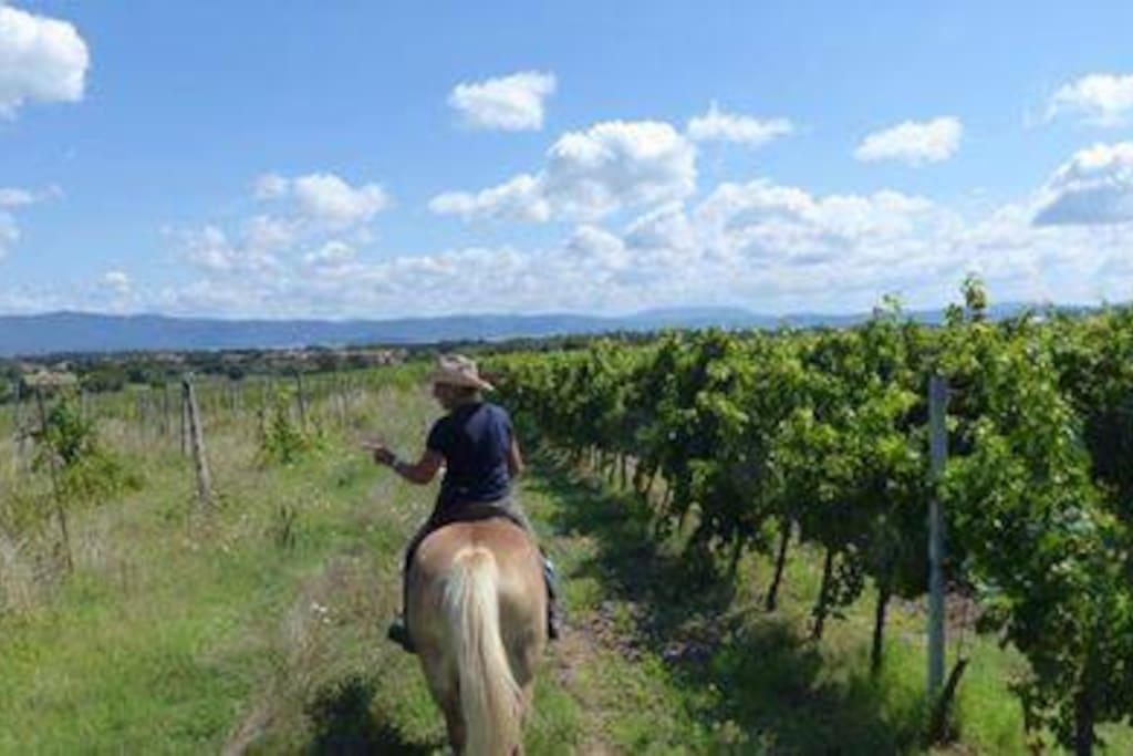 Wine Tasting Ride Outs available at my riding school 2mins walk from the apartment.