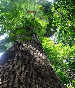 Nature Observatorio Treehouse tours - Manzanillo - Tretopphus