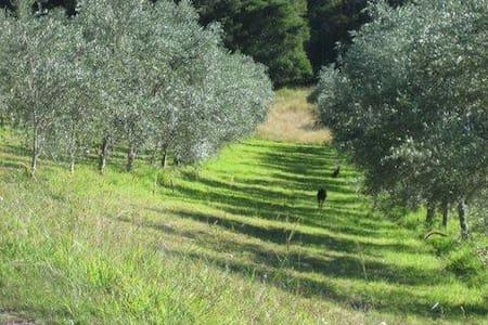 23 acre olive farm- Pencil Creek - Mapleton
