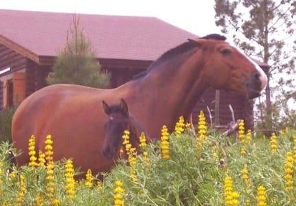 Casa natureza cavalos traquilidade - Pondok