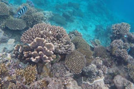 Villa Belo, Coral Coast, Fiji - Central Division, FJ - Villa