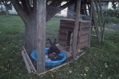 Waldviertler Wohnung im Vierkanthof - Daire
