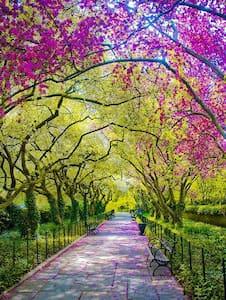 Amazing UWS /Central Park West