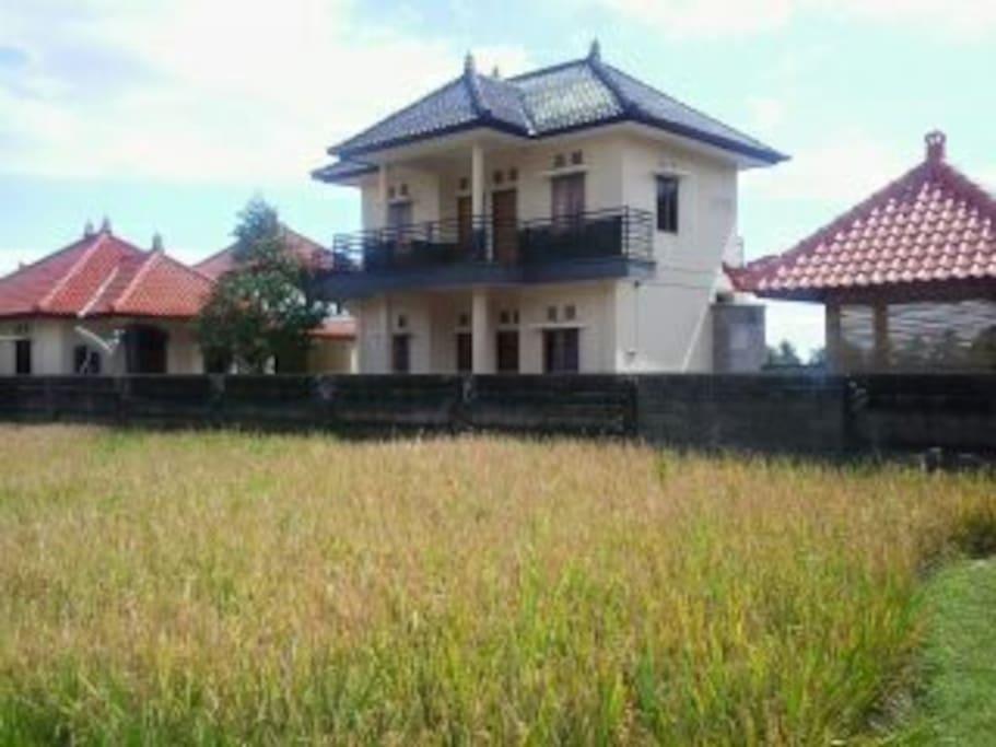 Losmen north bali Banyuatis