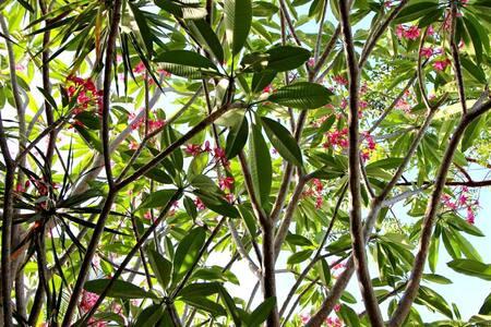 Tropical Tavernier Home - Dům