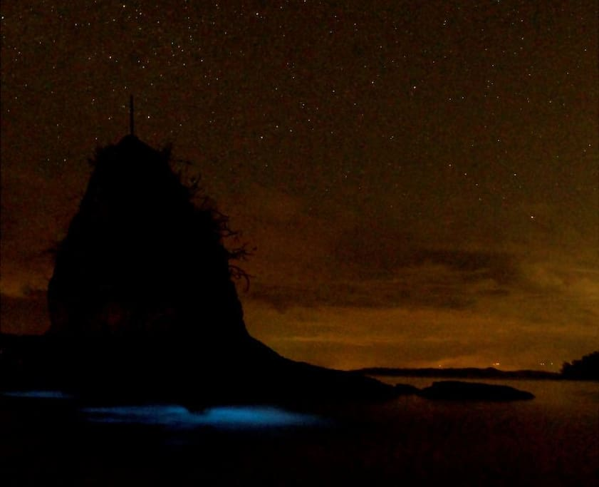 Bioluminescent Bay of Costa Rica - we take you on guided night kayak tours