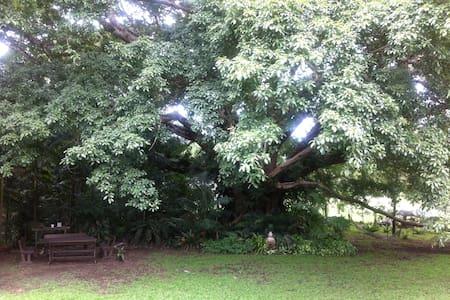 Clothiers Creek Garden of Eden - Bed & Breakfast