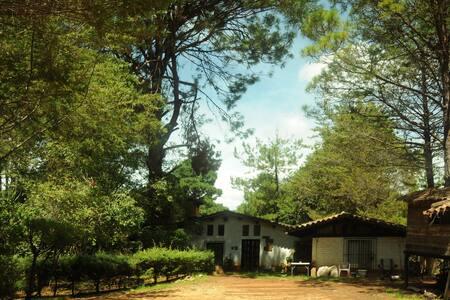 El ZENtro - An Amazing Place in the Forest - San Cristóbal de las Casas - Bed & Breakfast