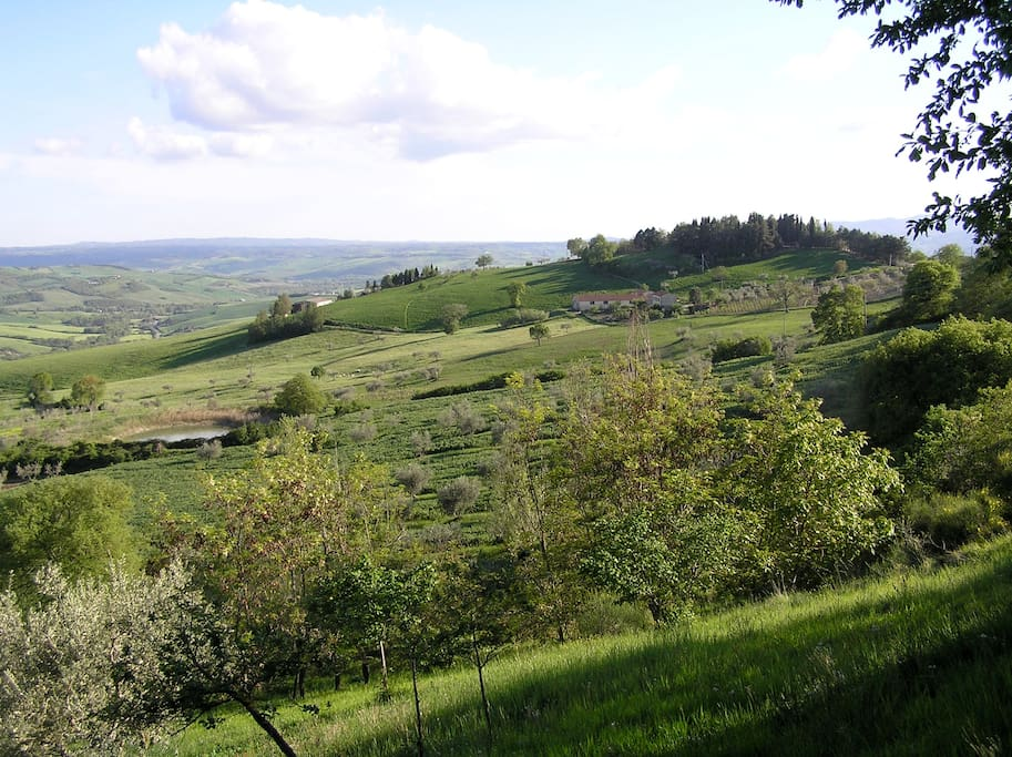 View from the house of neighboring farm and pond