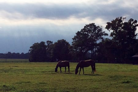 Peaceful Eastern Shore Horse Farm - Centreville - Casa